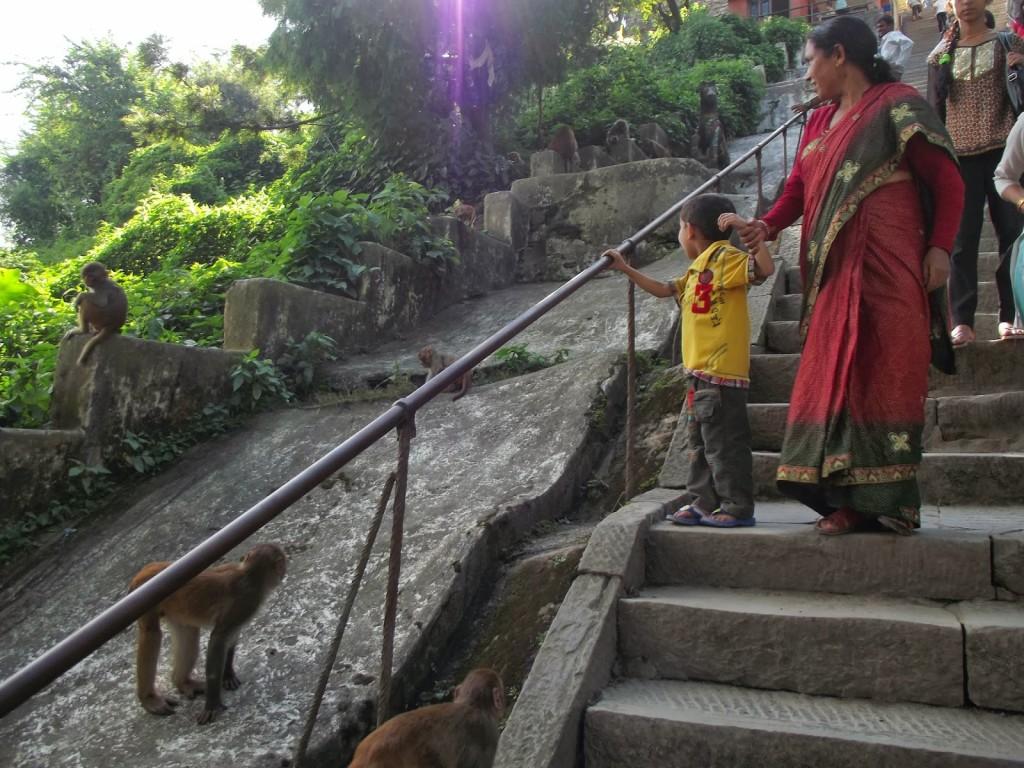 55. Shrine of monkeys, Nepal